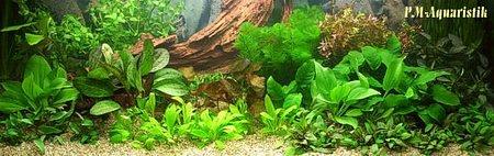 Pm aquaristik onlineshop und gesch ft in berlin for Pflanzen laden berlin